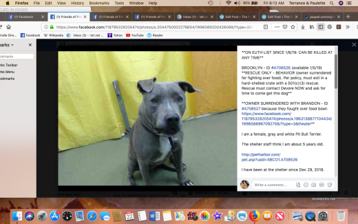 Brooklyn rescued with Brandon 2 Screen Shot 2019-02-22 at 6.13.15 AM
