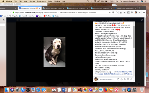 Jackson 2 rescued Screen Shot 2019-02-22 at 3.21.16 PM