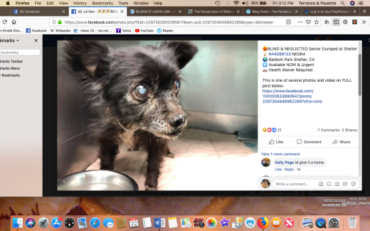Negra rescued Screen Shot 2019-02-22 at 3.12.17 PM