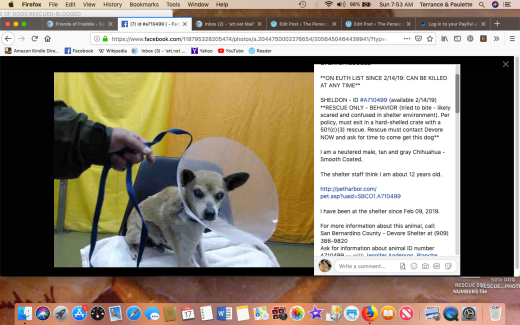 Sheldon 4 rescued Screen Shot 2019-02-17 at 7.53.23 AM