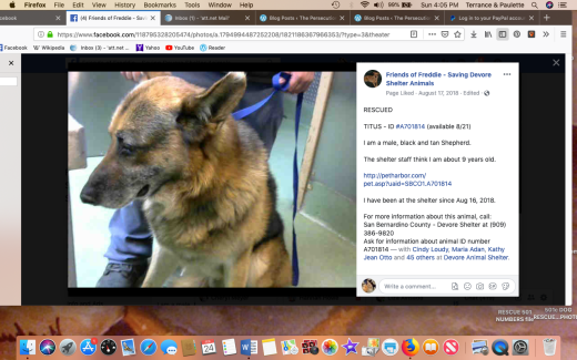 Titus rescued Screen Shot 2019-02-24 at 4.05.55 PM