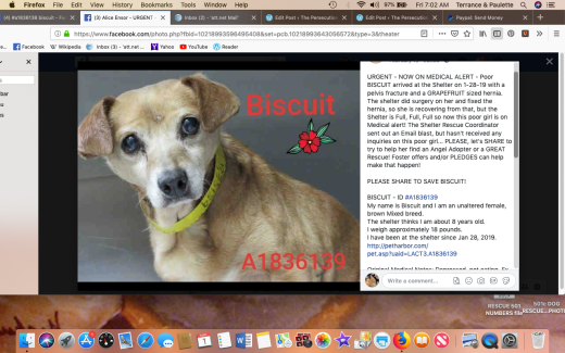 Biscuit 4 rescued Screen Shot 2019-03-01 at 7.02.00 AM