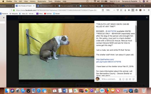 Boomer 2 rescued Screen Shot 2019-03-06 at 8.13.18 AM