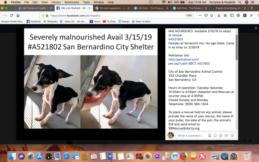 Gidget rescued named by rescue Screen Shot 2019-03-24 at 11.09.28 AM