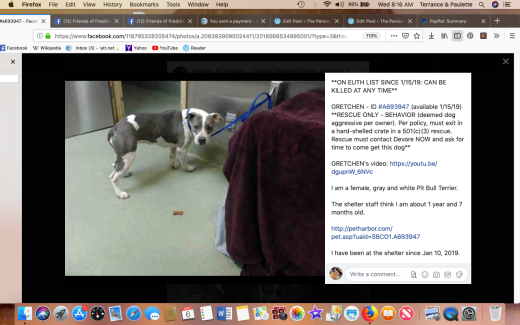 Gretchen 1 rescued Screen Shot 2019-03-06 at 8.16.37 AM