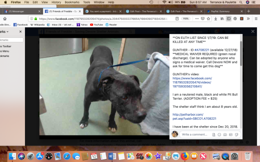 Gunther rescued Screen Shot 2019-03-10 at 8.57.23 AM