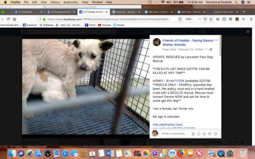 Honey rescued Screen Shot 2019-03-08 at 6.06.36 AM