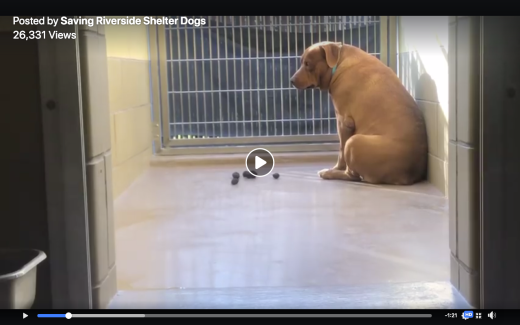 Jack 5 kennel photo Screen Shot 2019-03-04 at 7.46.31 AM