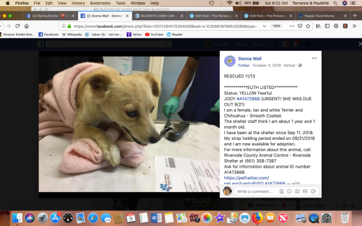 Jody 1 rescued Screen Shot 2019-03-09 at 8.02.55 AM