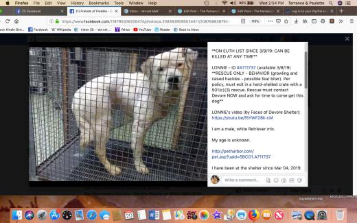 Lonnie 1 rescued Screen Shot 2019-03-20 at 2.54.20 PM