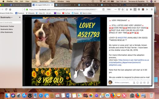 Lovey rescued Screen Shot 2019-03-30 at 7.36.44 AM