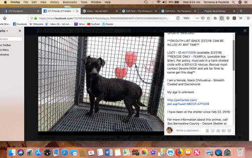 Lucy 6 rescued Screen Shot 2019-03-06 at 8.04.49 AM