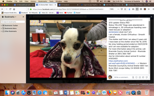 Phoebe 4 rescued Screen Shot 2019-03-16 at 3.49.22 PM
