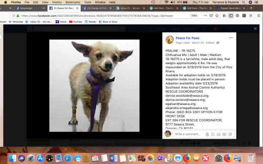Praline 2 rescued Screen Shot 2019-03-28 at 7.11.37 AM