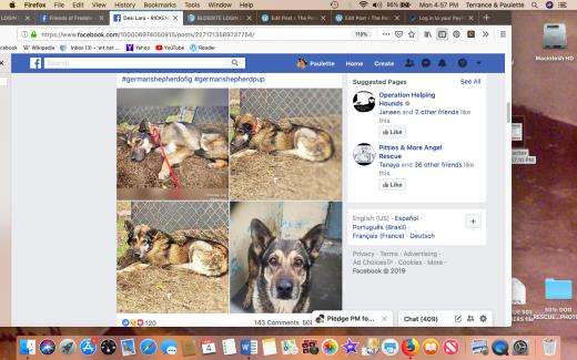 Rickenbacker rescued shewlter photo Screen Shot 2019-03-04 at 4.57.45 PM