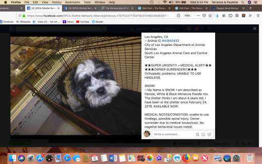 Snow aka Leela rescued Screen Shot 2019-03-06 at 6.34.53 PM