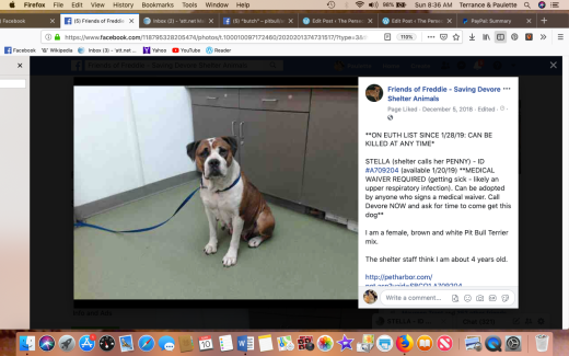 Stella 2 rescued Screen Shot 2019-03-10 at 8.36.20 AM