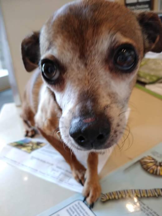 Tawny freedom at vet