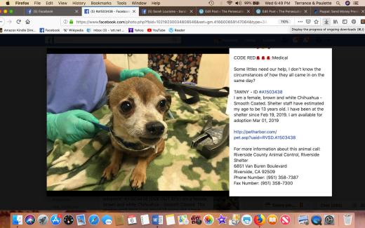 Tawny rescued Screen Shot 2019-03-06 at 6.49.29 PM