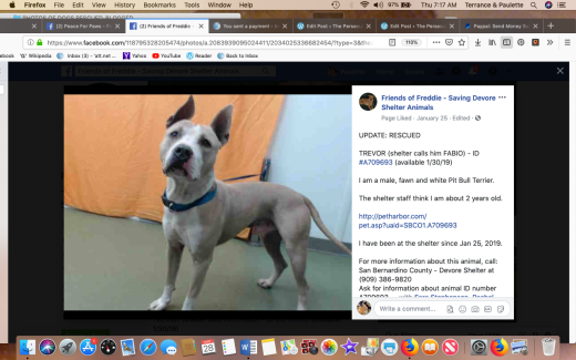 Trevor rescuewd Screen Shot 2019-03-28 at 7.17.04 AM