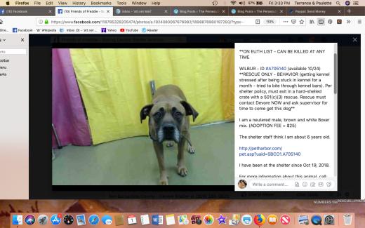 Wilbur 3 rescued 2019-03-01 at 3.33.14 PM