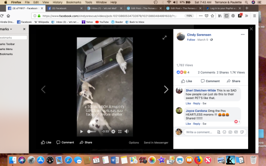 3 female terriers KENNEL poto kennel photoScreen Shot 2019-04-13 at 7.43.10 AM