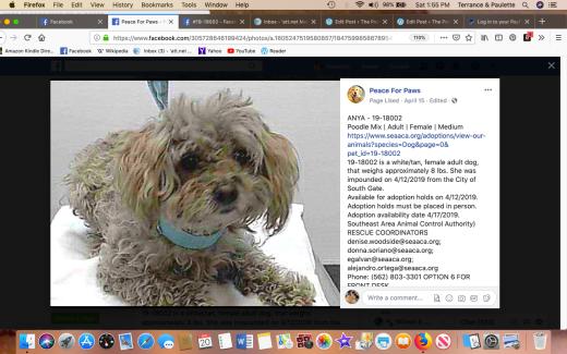 Anya 2 rescued Screen Shot 2019-04-20 at 1.55.23 PM