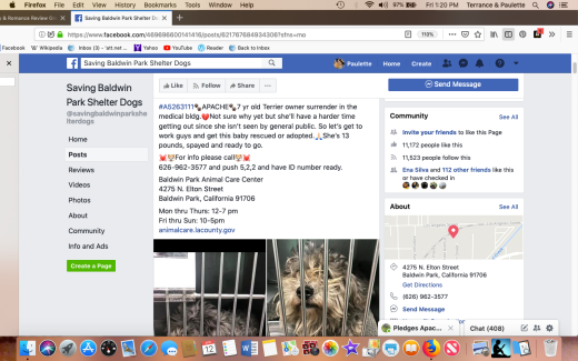Apache rescued Screen Shot 2019-04-12 at 1.20.13 PM