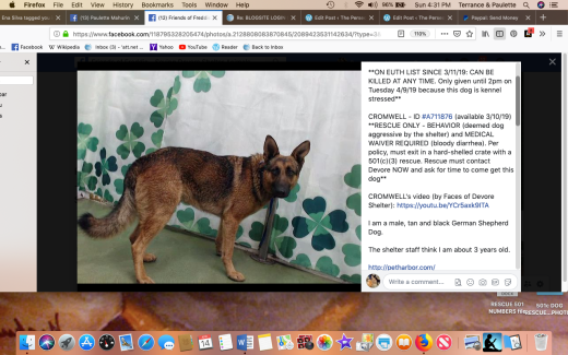 Cromwell rescued Screen Shot 2019-04-14 at 4.31.17 PM