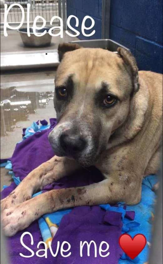 DaisyMae ID # 154743 rescued kennel photo