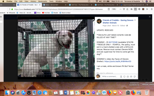 Dominic rescued Screen Shot 2019-04-03 at 10.55.44 AM