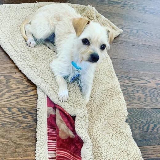 Female terrier 2 freedom