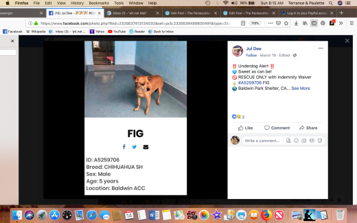 Fig rescued Screen Shot 2019-04-14 at 8.15.57 AM