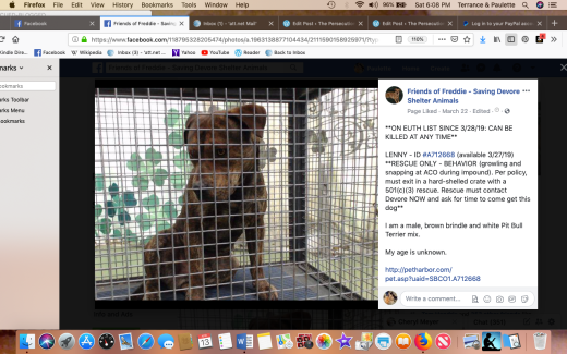 Lenny 2 rescued Screen Shot 2019-04-13 at 6.08.21 PM