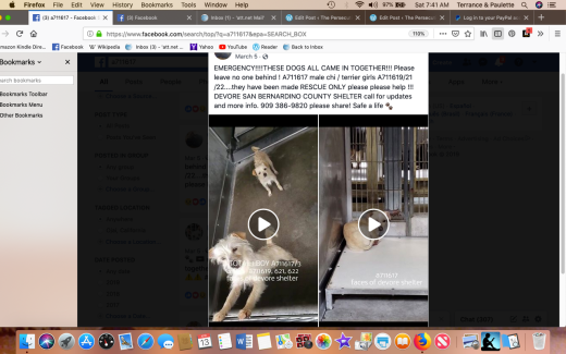 Male chi a711617 & 3 terrier girls RESCUED a711691-22 Screen Shot 2019-04-13 at 7.41.03 AM