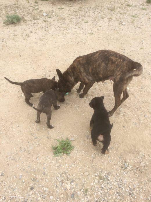 Mamma Raya & 3 puppies freedom