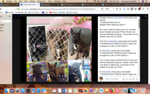 Momma Raya & 3 puppies rescued Screen Shot 2019-04-11 at 2.54.50 PM