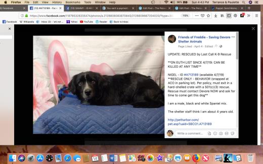 Nigel rescued Screen Shot 2019-04-14 at 4.43.13 PM