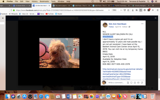 Paul #A5269225 rescued Screen Shot 2019-04-16 at 8.09.30 AM