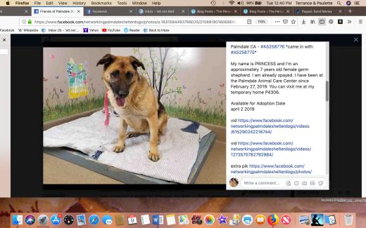 Princess 9 rescued Screen Shot 2019-04-09 at 12.40.09 PM