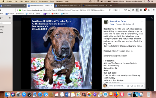 Rootbeer rescued Screen Shot 2019-04-17 at 9.22.58 AM
