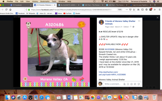 Rosie 6 rescued Screen Shot 2019-04-21 at 1.31.13 PM
