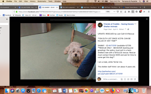 Sammy 2 rescued Screen Shot 2019-04-14 at 4.42.36 PM