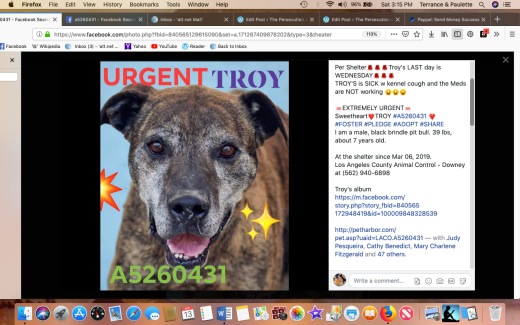 Troy rescued Screen Shot 2019-04-13 at 3.15.10 PM