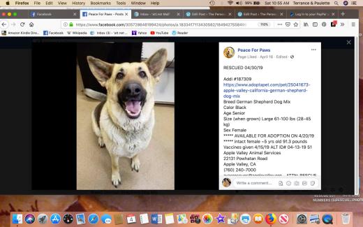 Addi rescued Screen Shot 2019-05-04 at 10.55.38 AM