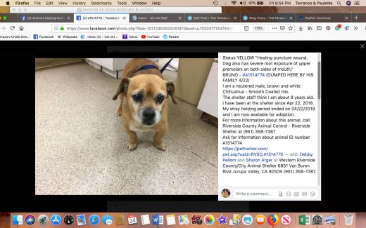 Bruno 4 rescued Screen Shot 2019-05-24 at 8.54.44 PM