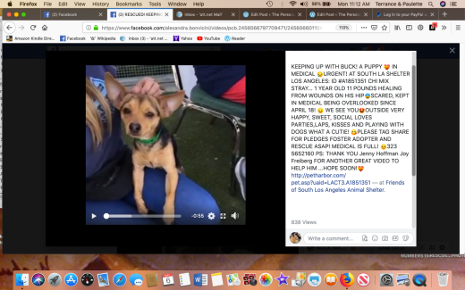 Buck rescued Screen Shot 2019-05-06 at 11.12.01 AM