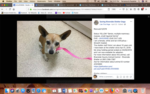 Evie aka Princess (rescue name) rescued Screen Shot 2019-05-04 at 2.37.08 PM