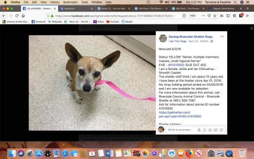 Evie aka Princess (rescue name) rescued Screen Shot 2019-05-04 at 2.37.08 PM