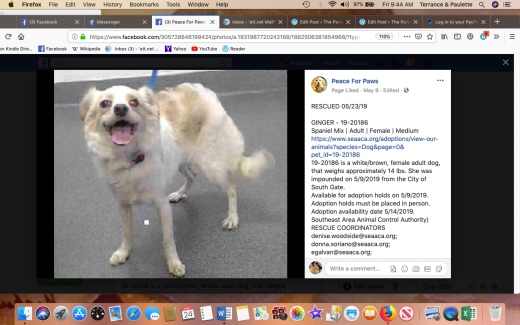 Ginger 4 rescued Screen Shot 2019-05-24 at 9.44.43 AM
